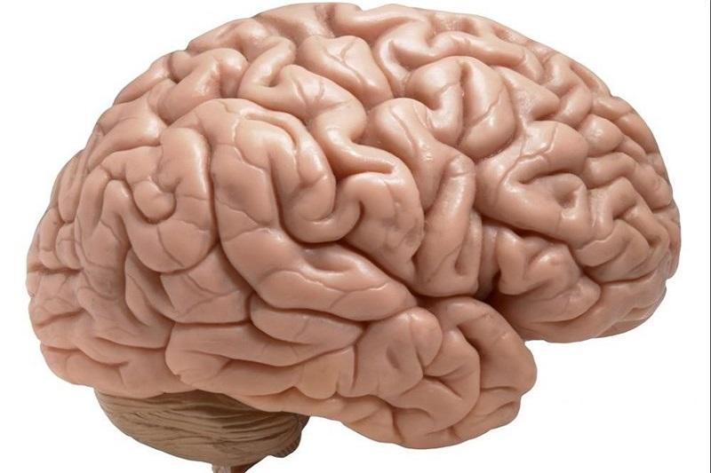کشف اثر انگشت مغز برای تشخیص هویت افراد