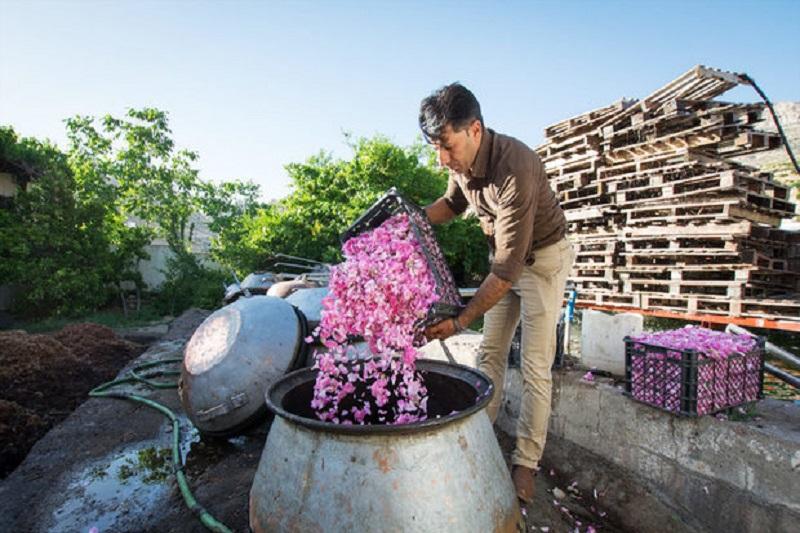 گلابگیری قمصر کاشان و شستوشوی خانه کعبه ثبت جهانی میشود