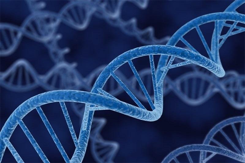 با تشخیص DNA دوستان قدیمی خود را پیدا کنید