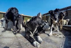 Vafa Animal Shelter