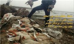 کشتار بیرحمانه پرندگان مهاجر در هورالعظیم + تصاویر