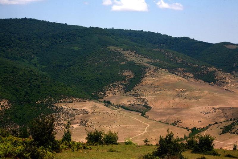 نبرد نابرابر درختکاری و جنگلزدایی/ سرنوشت نهالها در ابهام