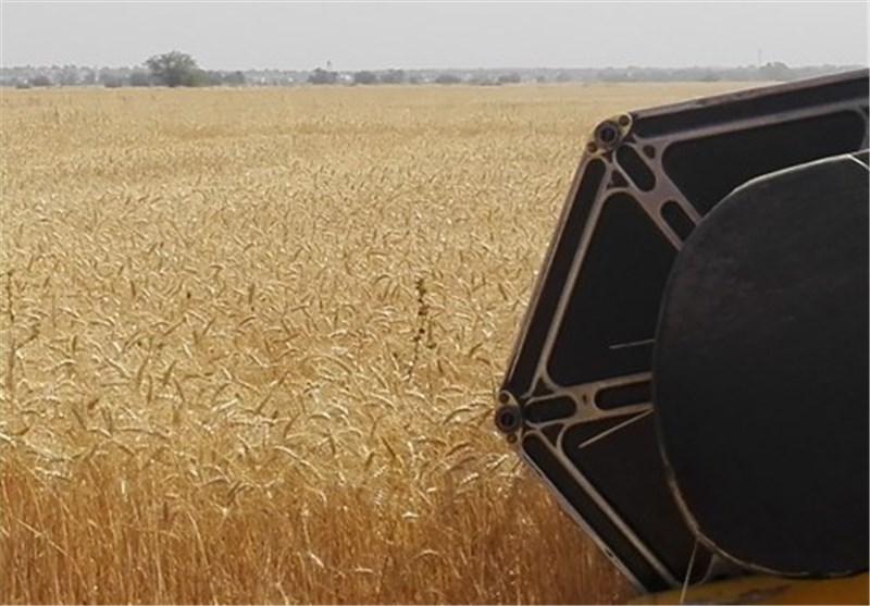 هدفگذاری خودکفایی ۱۰۰ درصدی تولید گندم و ۹۰ درصدی حبوبات در سال ۹۵
