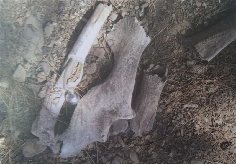 رازگشایی از استخوانهای کشف شده در غرب تهران