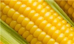 واردات ۵.۵ میلیارد دلار محصولات تراریخته به کشور/ ۳۰ درصد محصول کشاورزی به ضایعات تبدیل میشود