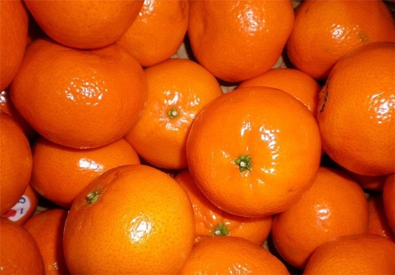 ورود نارنگی قاچاق پاکستان با قیمت کیلویی۷ هزار تومان