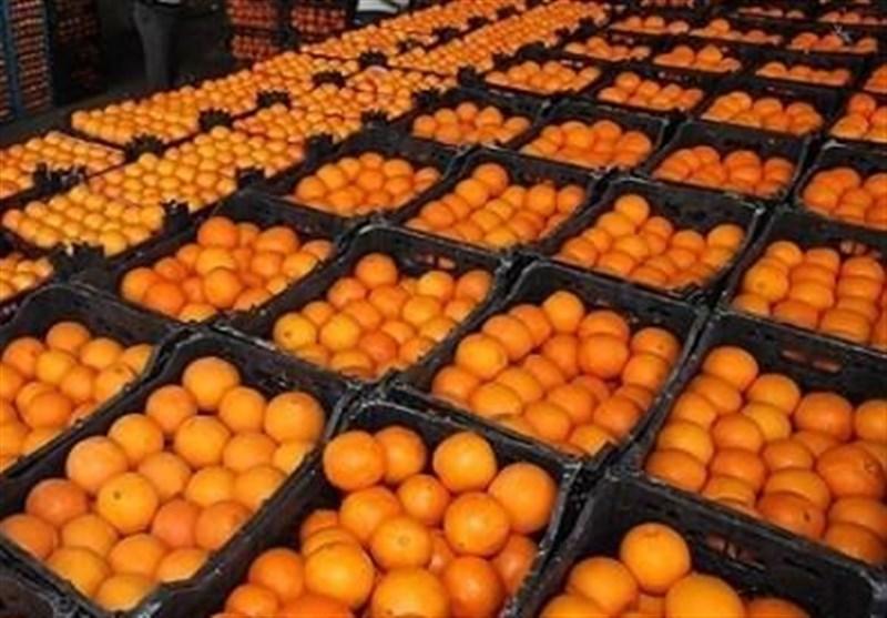 ۶۰۰ هزار تن پرتقال ترکیه در راه ایران/ اعمال فشار افراد خاص به جهادکشاورزی