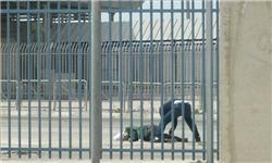 تیراندازی صهیونیستها به دختر ۱۶ساله فلسطینی