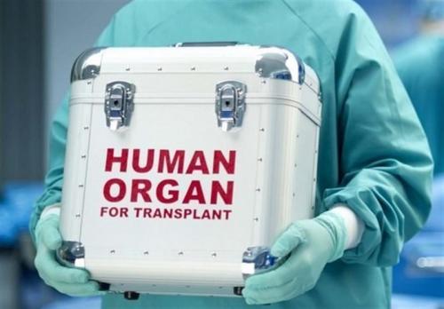 ابداع یک روش جدید برای نگهداری اندامهای اهدایی