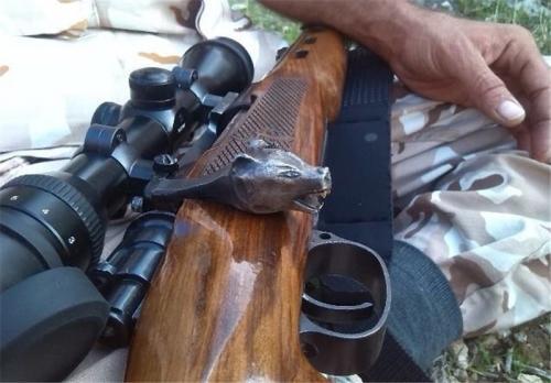 درگیری مسلحانه شکارچیان غیرمجاز با محیط بانان پارک ملی گلستان/ یک شکارچی مجروح شد