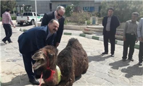 رونمایی از گردنبند شبرنگ شتر در همایش روز زمین پاک/ «ابتکار» غایب بود