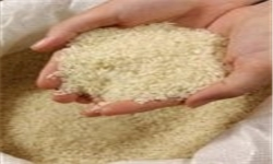 ایران ۱۶۰ هزار تن برنج از تایلند خریداری کرد