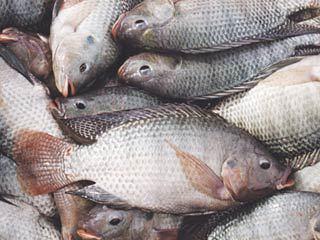 قیمت جدید ماهی در بازار