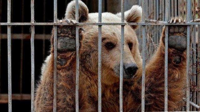 قاچاق حیوانات در باغ وحش!