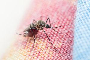 مبارزه با مالاریا با پهپاد و گوشی هوشمند