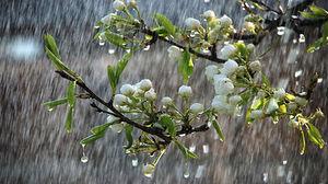 وضعیت آغاز بارش ها در کشور