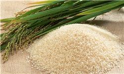 جزییات حمایت از تولید برنج داخلی تشریح شد