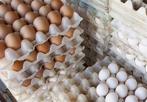 تاثیر قیمت ارز بر قیمت تخممرغ!