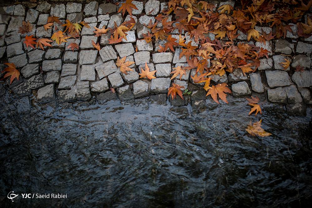 تهران به رنگ پاییز+عکسها