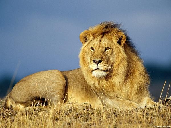 شکار خنده شیرها توسط یک عکاس+عکس