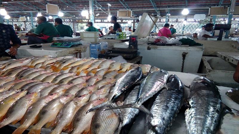 واکنش جالب یک وزیر به دیلیل گران شدن ماهی + فیلم