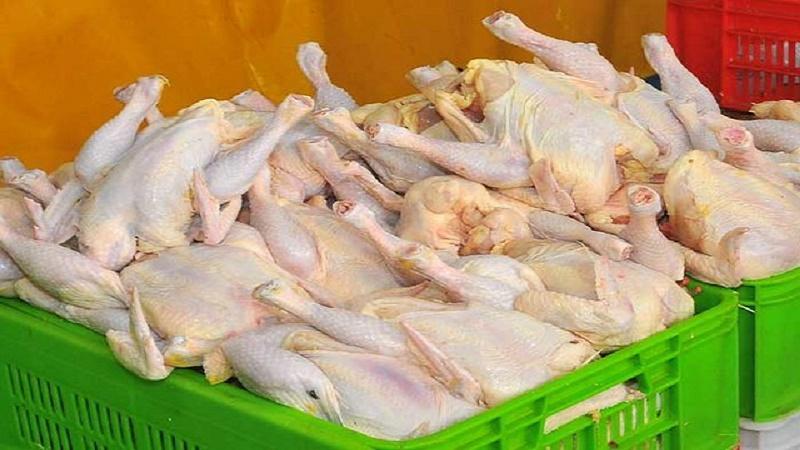 قیمت مرغ در ۱۰ روز آینده متعادل میشود