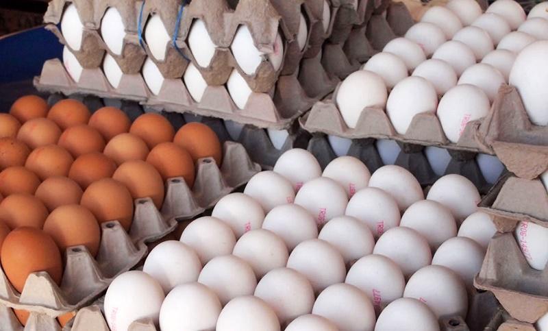 واردات ۲ هزار و ۲۰۰ تن تخم مرغ طی یک ماه اخیر