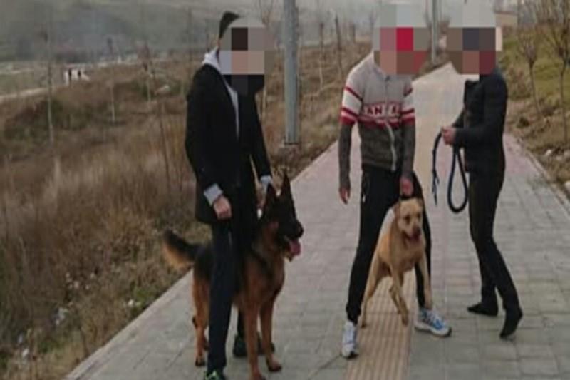 اظهارات دردناک پدر دختربچهای که مورد حمله دو سگ قرار گرفت +فیلم