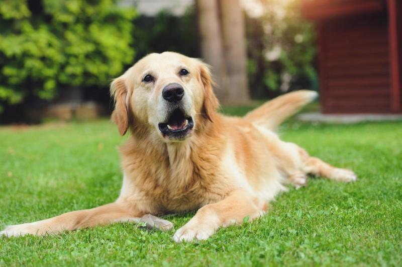 نگهداری سگ و قوانین سایر کشورها+عکس