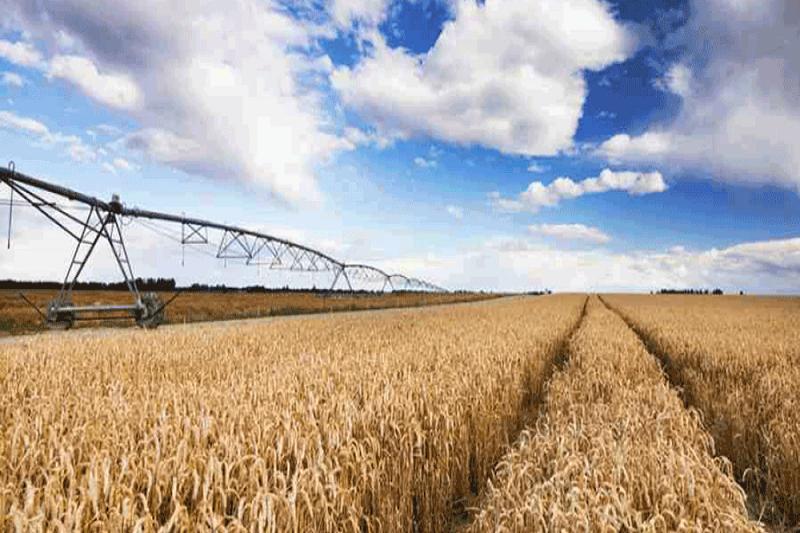 نرخ خرید تضمینی هر کیلو گندم برای سال زراعی  ۹۸-۹۷ به ۱۷۰۰ تومان افزایش یافت