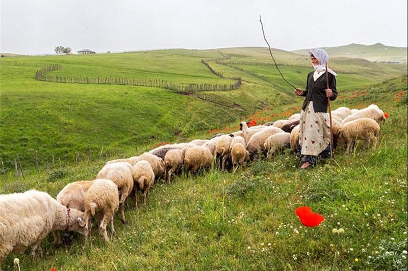بیمه تکمیلی روستاییان و عشایر برای اولین بار از سال آینده