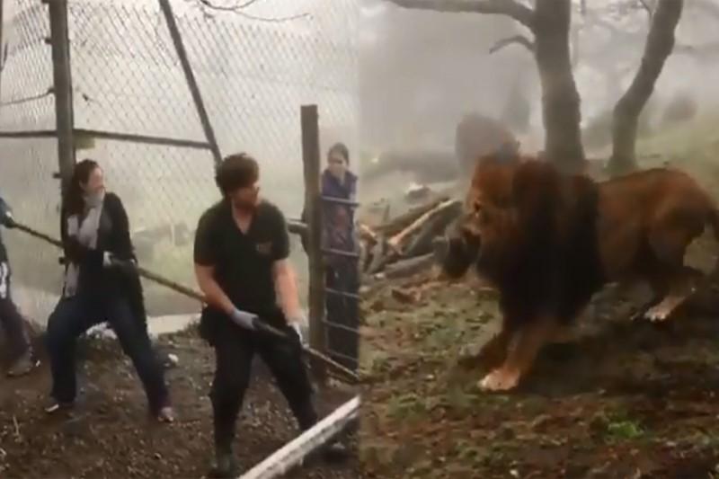 حیوان آزاری در باغ وحشی در انگلیس خبرساز شد +فیلم