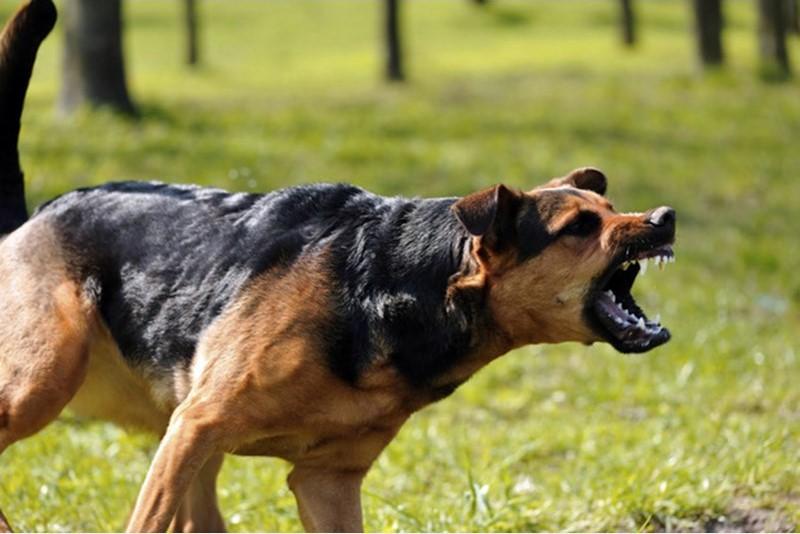 لحظه وحشتناک حمله سگ ها به پسر نوجوان و دفاع زن ناشناس!+فیلم و تصاویر