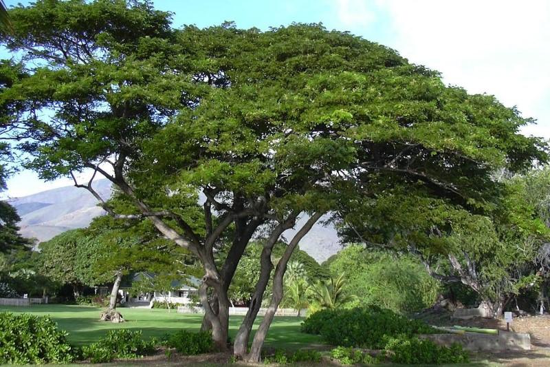 ۲۰۰ هکتار درخت مثمر در بام خرم آباد کاشت شد