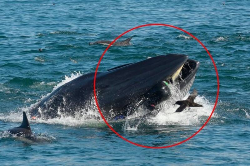 حادثه وحشتناک برای یک غواص در دهان نهنگ+فیلم