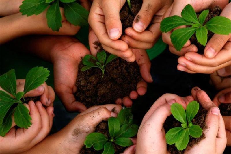 درختکاری بیهدف مخرب طبیعت است