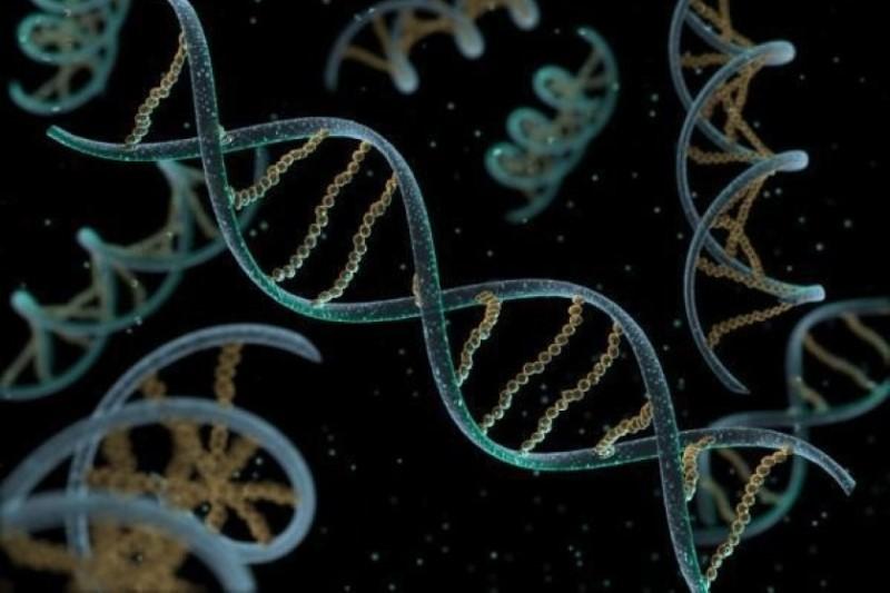 طراحی و ساخت دستگاه تکثیر ژن (PCR) در دانشگاه صنعتی شریف