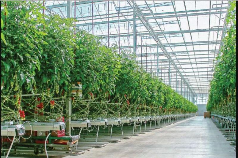 قیمت تجهیزات گلخانهای افزایش یافت