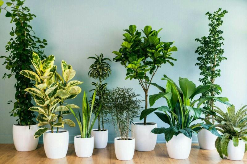 بهترین گیاهانی که تصفیه کننده هوای خانه هستند