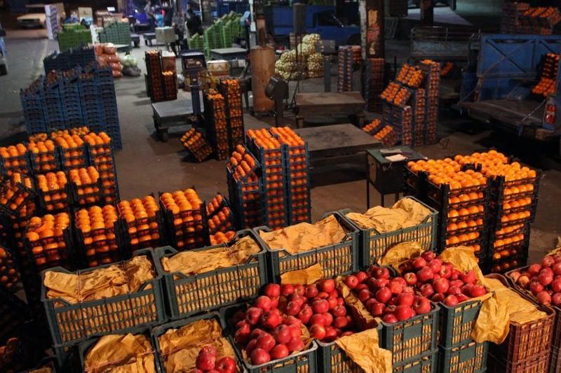 لغو ممنوعیت صادرات سیب درختی و پرتقال