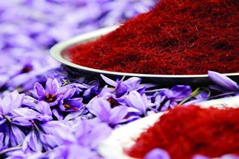 افزایش ۲۰ درصد تولید زعفران در راه است