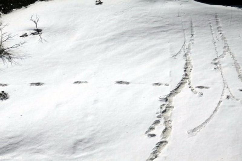 ردپای عجیب در کوههای هیمالیا +تصاویر
