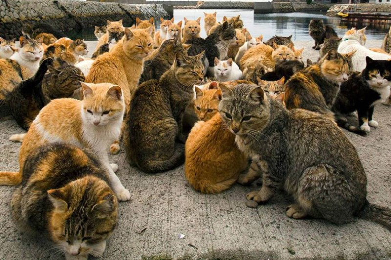 کشتار میلیونها گربه خیابانی توسط دولت استرالیا
