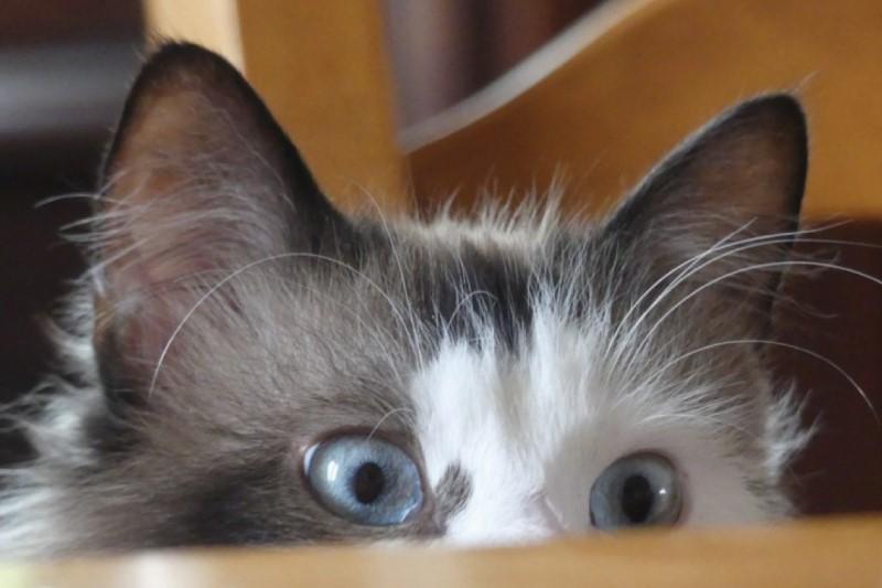 پروژه   ۲۰ میلیون دلار ی برای آموزش گربههای جاسوس شکست خورد