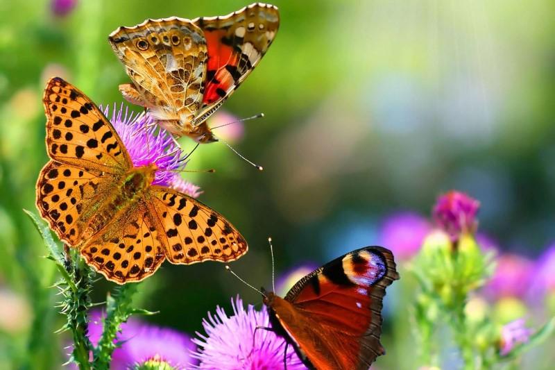 پروانه رنگینبانو  میهمانهای ناخوانده پایتخت را بیشتر بشناسید
