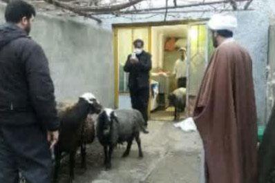 عکس| تهیه و توزیع گوشت هیئت فاطمیون خواهران همدان