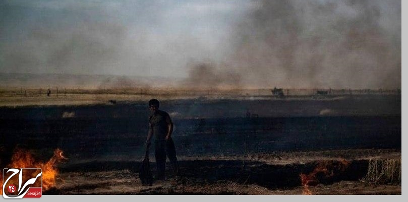 سوزاندن محصولات کشاورزی در سوریه با موافقت ترامپ