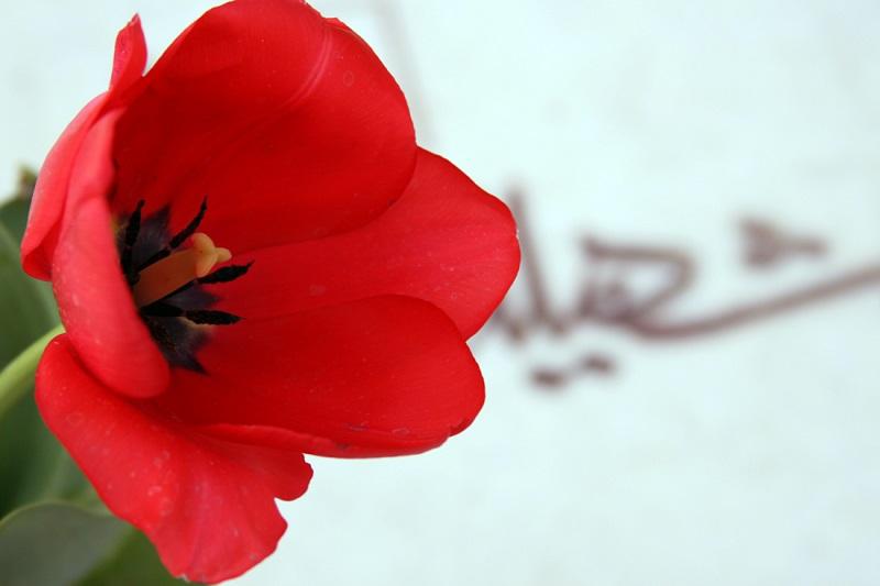 سیری بر زندگینامه شهید «رضا رضویوند»