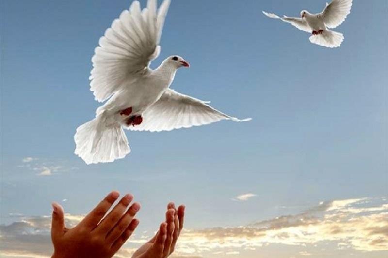 قرار همدلی با زندانیان جرائم غیرعمد در البرز
