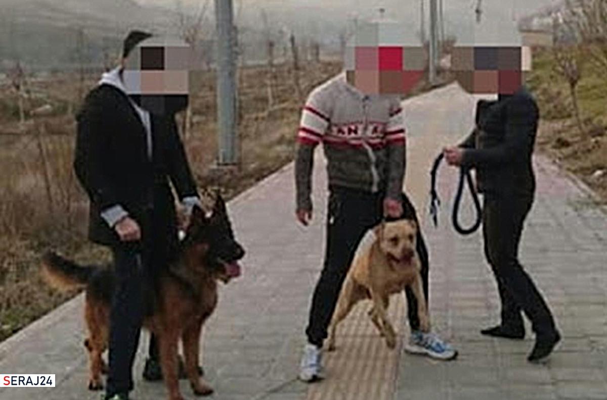 راهکارهایی برای مواجهه با سگ گردانی در پارکها